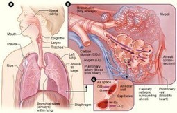 Epidemic and causes of lung cancer and how it can be treated to overcome   Best Hospital for Heart Treatment in Chennai   Scoop.it