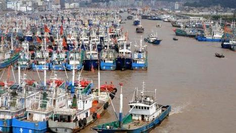 China illegally fishing in Africa, Greenpeace study finds | NGOs in Human Rights, Peace and Development | Scoop.it
