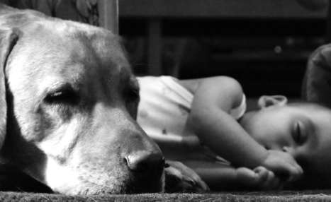 Babies Are Healthier When There Is a Dog at Home: Research | Mind Candy  { interdimensionally } Cubed... It's SO yesterday to be a Square | Scoop.it