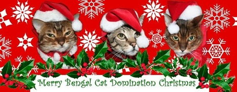 Bengal Cat Domination: Tis That Season Again | Love Of Cats | Scoop.it