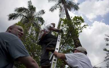 Cat rescued from Tampa tree, but not how you think   Feline Health and News - manhattancats.com   Scoop.it