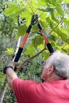 Loganville Tree Pruning   Walton County, GA Tree Pruning   Loganville Tree Service   Tree Pruning Loganville   Scoop.it