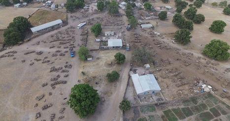 Un drone filme le pillage pour la Chine des dernières forêts du Sénégal | Planete DDurable | Scoop.it