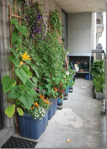 Twitter / gangstagardener: So, what's your excuse for ... | Container Gardening | Scoop.it