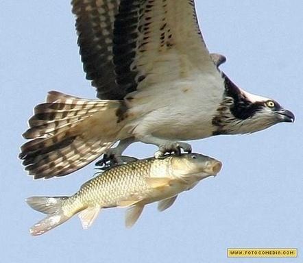 Pescador | www.fotocomedia.com | Comentário das aulas de biologia | Scoop.it