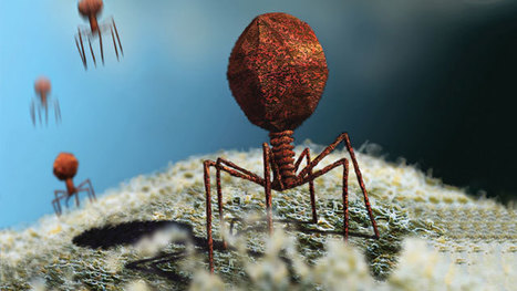 An Ocean of Viruses   Weird Science   Scoop.it
