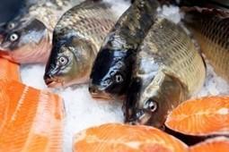 Saumon de Norvège : à nous faire perdre l'appétit ! | Toxique, soyons vigilant ! | Scoop.it