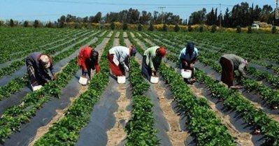 Sénégal : Les paysans de Sédhiou disposent «d'un matériel obsolète datant depuis l'antiquité» | Questions de développement ... | Scoop.it