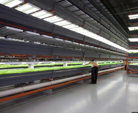 Nation's Largest Indoor Vertical Farm Opens Its Doors | SFO_Marketing | Scoop.it