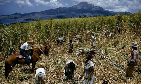 The food sector braces itself for crackdown on modern-day slavery | Sustain Our Earth | Scoop.it