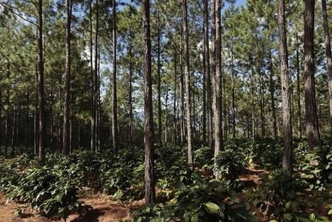 What Does Private Investment Into Coffee Farms Actually Look Like? | Coffee News | Scoop.it