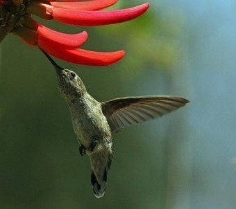 "Google's new Algorithm ""Hummingbird"" turns SEOs into Birdwatchers 