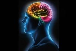 El cerebro es el reflejo de lo que comes   Era del conocimiento   Scoop.it