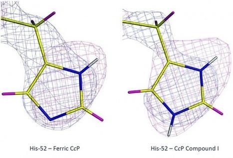 Quand la cristallographie neutronique résout une énigme biologique | myScience | Scoop.it