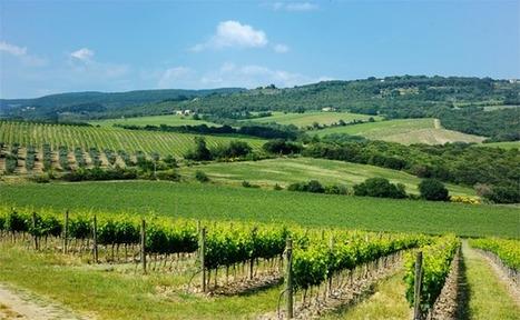 Un cluster de la filière vitivinicole au coeur des vignes   Le vin quotidien   Scoop.it