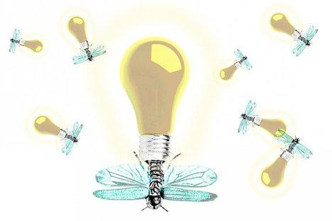 Quand la lumière vient des lucioles | EntomoNews | Scoop.it