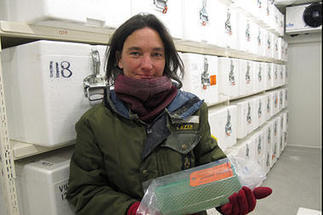 Antarctic ice samples: What do they say about global warming?   Antarctic research   Scoop.it
