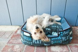 4 Tips for Choosing a Dog Bed | The Dog Blogger | Scoop.it