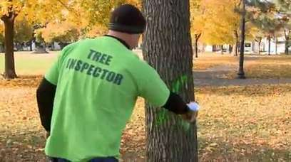 City of Minneapolis removing all ash trees - KARE | Trees and Woodlands | Scoop.it
