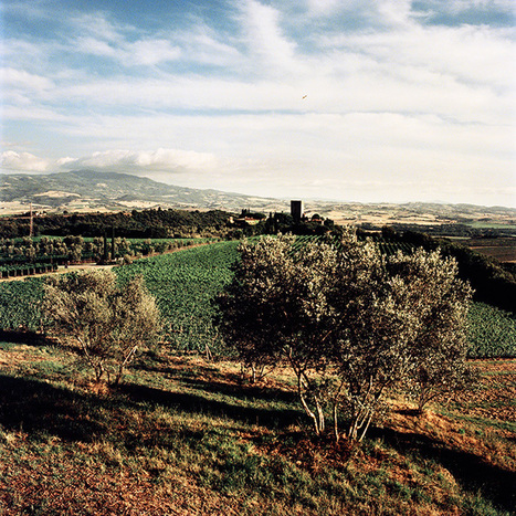 The rise of the Super Tuscans – and the response | Wine website, Wine magazine...What's Hot Today on Wine Blogs? | Scoop.it