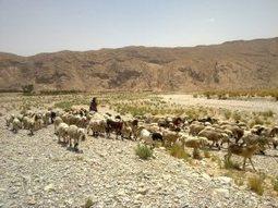Camel Ensures Sustainable Productivity | Sustainable Livestock Agenda SLA | Scoop.it