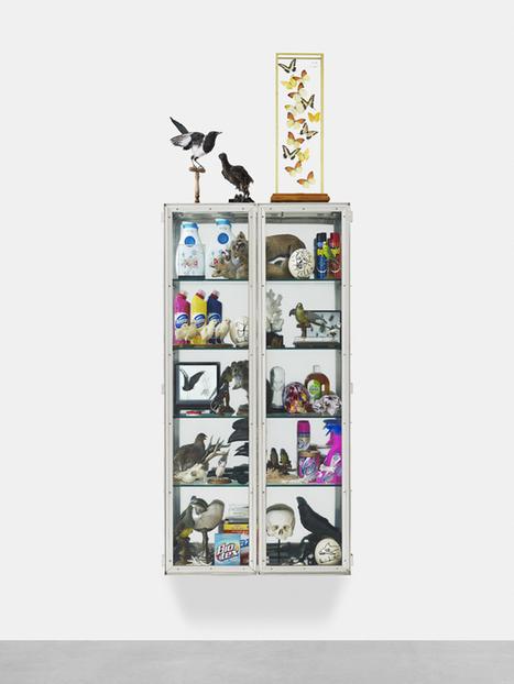 Deyrolle x Damien Hirst - Materialiste Paris | Anthropology of taxidermy | Scoop.it