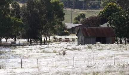 D'immenses toiles d'araignées envahissent la campagne australienne   Mais n'importe quoi !   Scoop.it