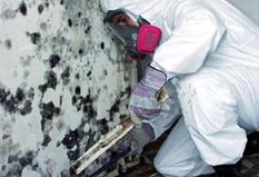 Mold Removal Companies New Jersey | Waterproofing | Scoop.it