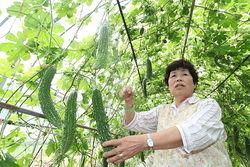 [Eng] Les Hot Spots trouvés à Fukushima ville inquiètent les producteurs de Goya | The Mainichi Daily News | Japon : séisme, tsunami & conséquences | Scoop.it