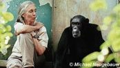Journey Beyond The Jungle With Dr. Jane Goodall at Southern Alberta Jubilee Auditorium on Apr 08, 2015 | Bring Africa Home | Scoop.it