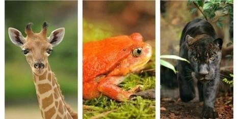 IL Y A 2 ANS / Le MNHN propose le parrainage en ligne de certains animaux du nouveau zoo de Vincennes | Clic France | Scoop.it