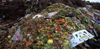 Revelations about food waste give the lie to need for GM foods | GMOs | Scoop.it