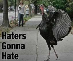 Nearly all consumed turkeys are the result of artificial insemination! | Strange days indeed... | Scoop.it