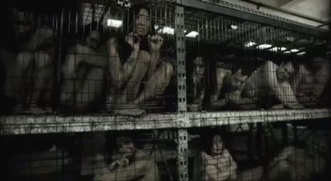 Human Meat Farm | Veganism | Scoop.it