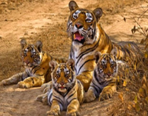 Corbett Taj Mahal Tour,Corbett Tours,Taj,Wildlife Corbett Travel | Tour Advisors India | Scoop.it