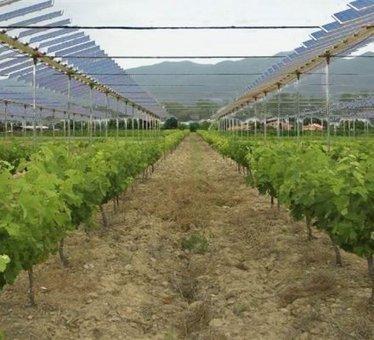 Une parcelle expérimentale de panneaux photovoltaïques dans les vignes | Agriculture durable | Scoop.it