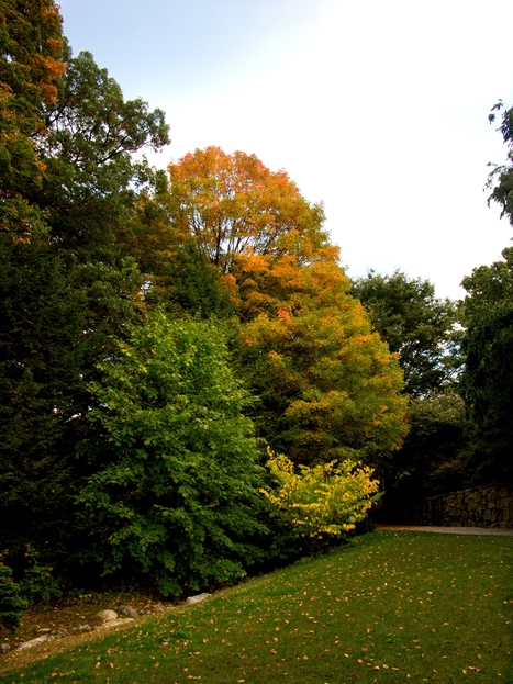 Arnold Arboretum: Fall foliage picks of the week | The Miracle of Fall | Scoop.it