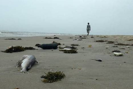 Taiwanese Firm Takes Blame for Vietnam's Mass Fish Deaths | Our Evolving Earth | Scoop.it