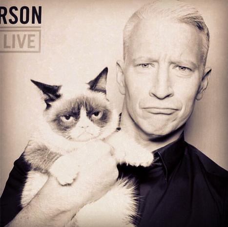 When Anderson Cooper Met Grumpy Cat | Les chats c'est pas que des connards | Scoop.it