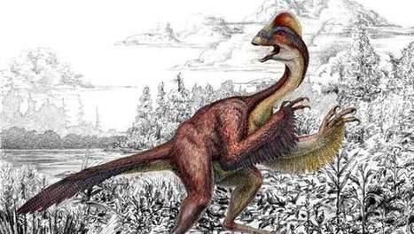 Nieuwe dinosaurus ontdekt: Chicken from Hell | KAP-JurakholovaM | Scoop.it