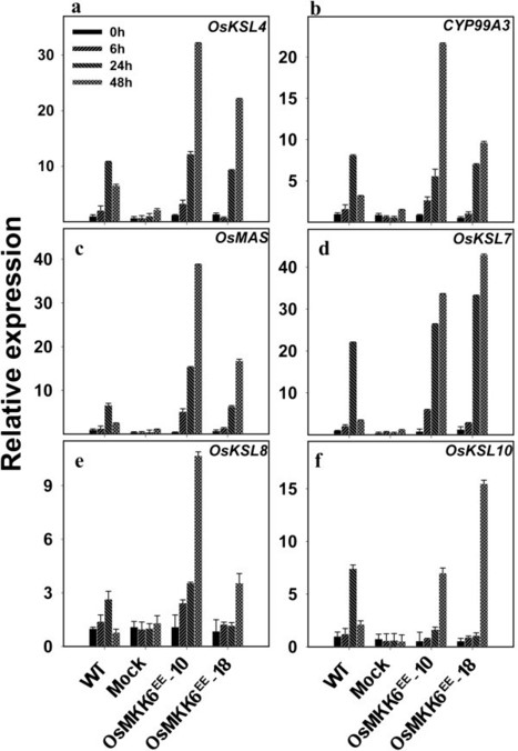 Involvement of mitogen activated protein kinase kinase 6 in UV induced transcripts accumulation of genes in phytoalexin biosynthesis in rice | Rice Blast | Scoop.it