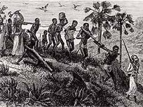 Africans in America | Part 1 | Narrative | The African Slave Trade and the Middle Passage | West African Slave Trade | Scoop.it