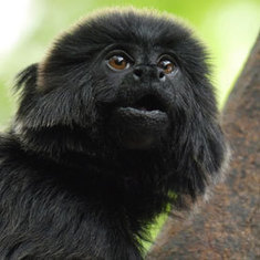 Monkey's Alarm Calls Reveal Predator's Who and Where: Scientific American | Environment and Conservation News | Scoop.it