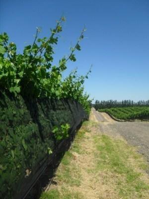 Patagonian winetasting adventures – Bodega NQN | South American Wines Online | Scoop.it