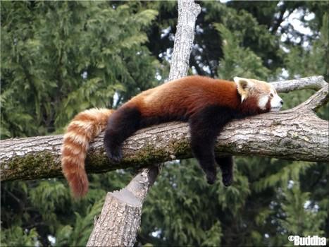 DSC00727.JPG (1600x1200 pixels) | Les Pandas | Scoop.it