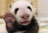 Pandas Live | Elementary Education Tools | Scoop.it