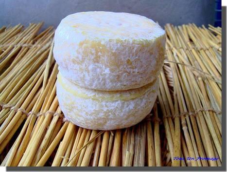 Pélardon : la Fromagerie des Cévennes en difficulté. | The Voice of Cheese | Scoop.it