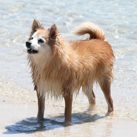 Water safety for dogs | Dog Lovers | Scoop.it