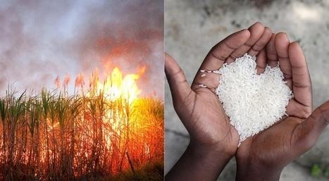 Millones mueren de Hambre mientras Occidente destruye alimentos - Aleteia | Comportamiento humano en el contexto social | Scoop.it