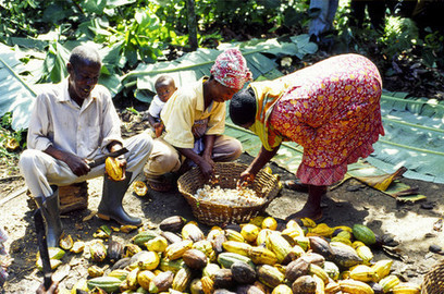 Taking stock: Time cocoa farmers got a bite of the chocolate business? | Natural & Organic Business Journal | Scoop.it